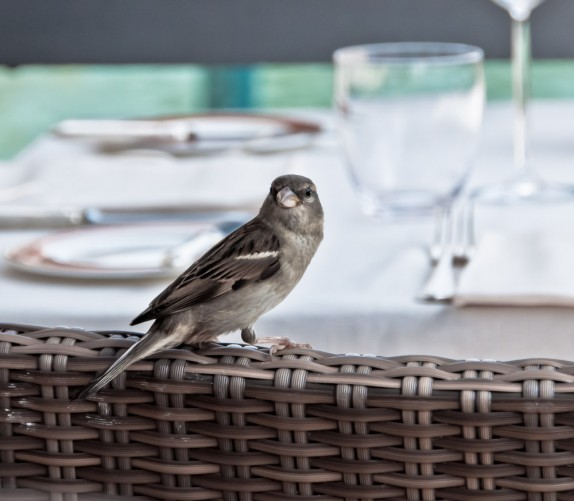 Bird-Joins-For-Cicchetti